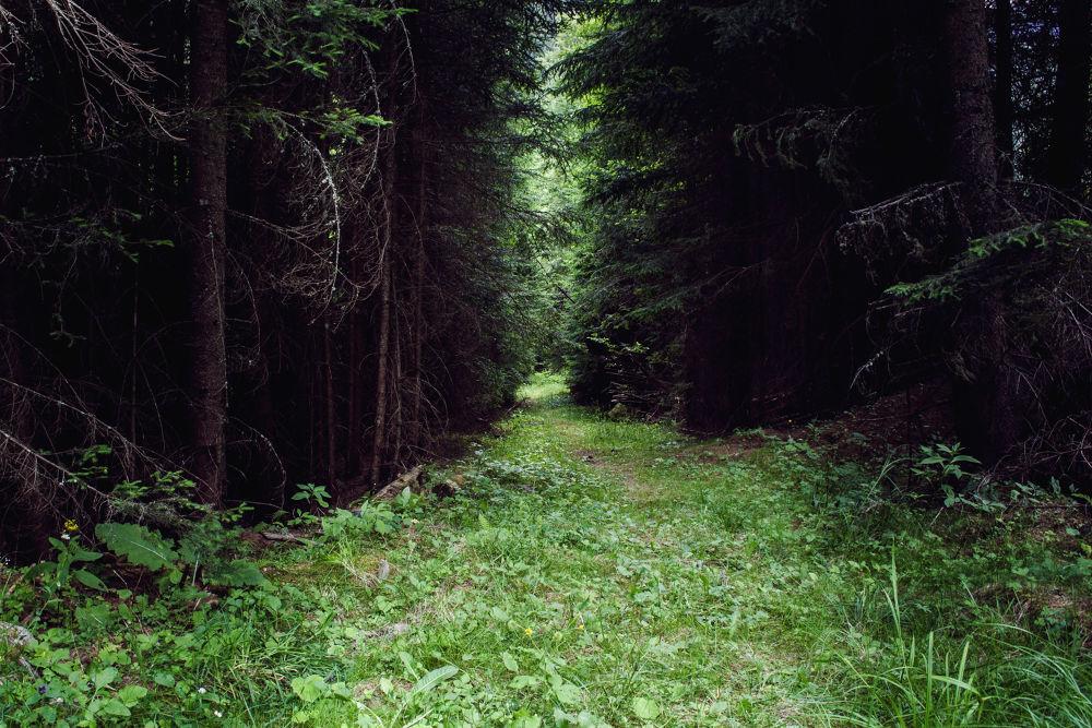 Path to light by Cretu Stefan