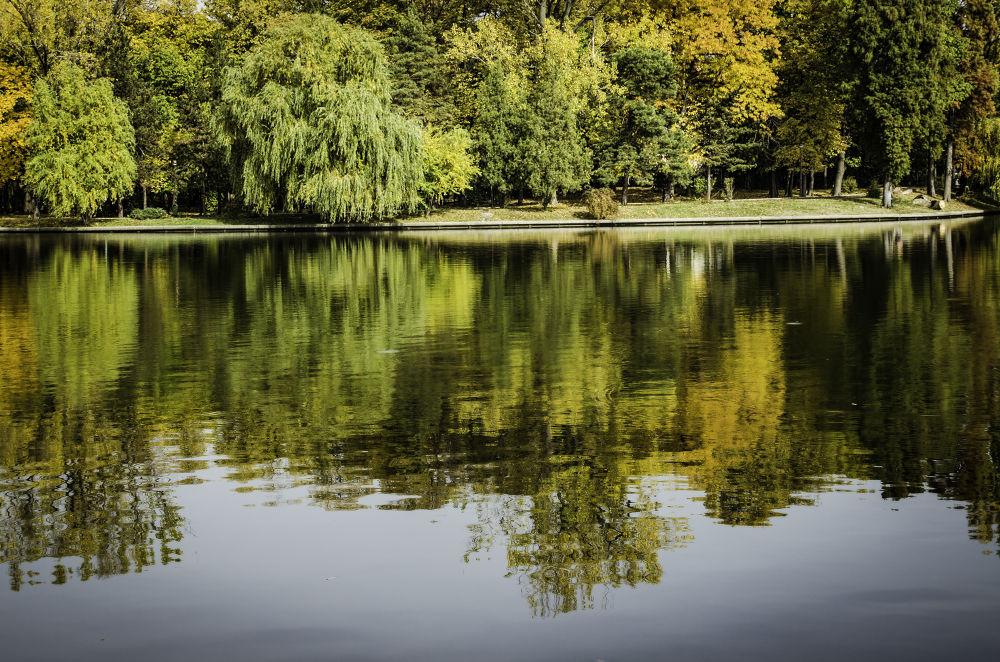 Picture of Fall by Cretu Stefan