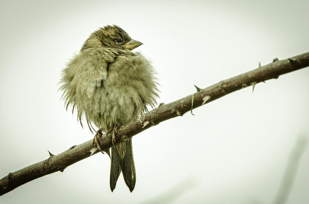 Angry bird by Cretu Stefan