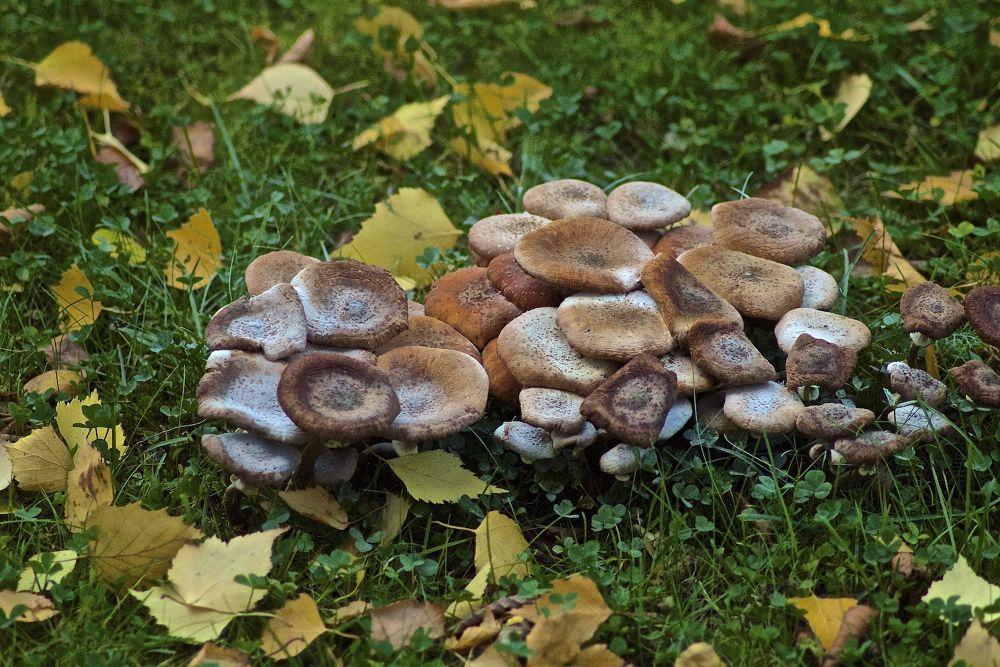 Photo in Nature #mushrooms