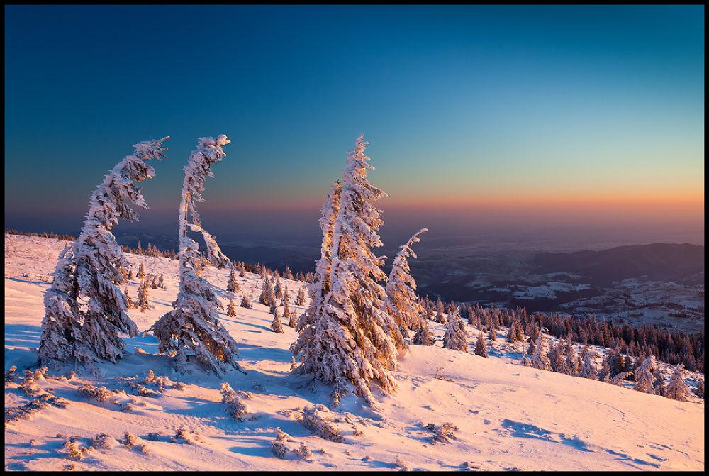 Photo in Landscape #nature #landscape #mountains #winter #romania #trees #snow #sunrise #colorful