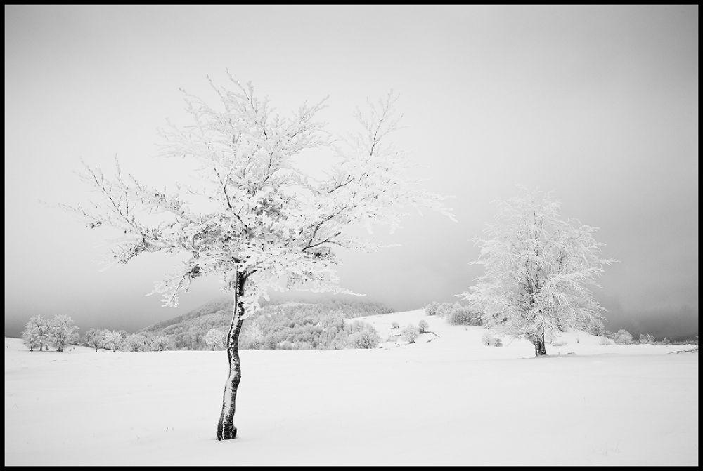 first snow by zsoltandrasszabo