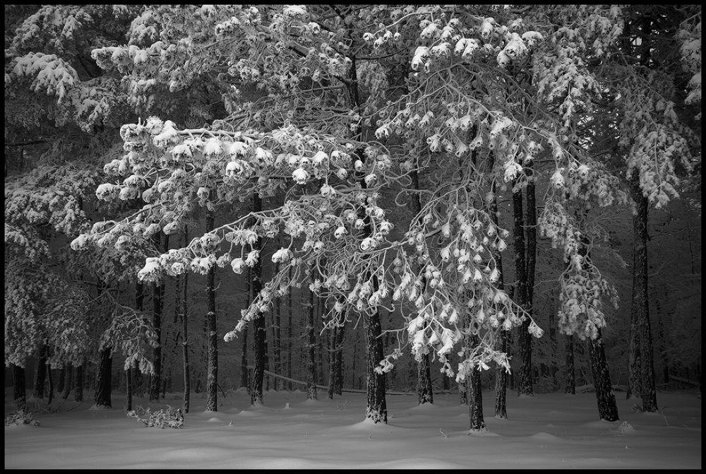 winter by zsoltandrasszabo