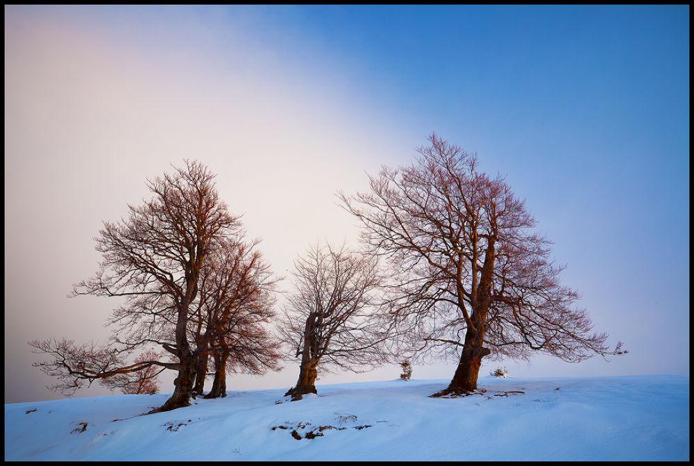 winter trees by zsoltandrasszabo