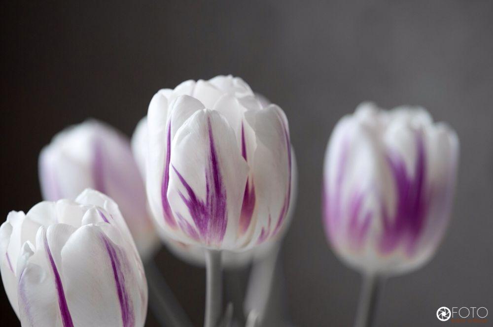 Tulips and flowers by johanerdhage