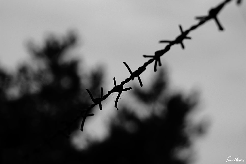 Barbed wire by tohladik