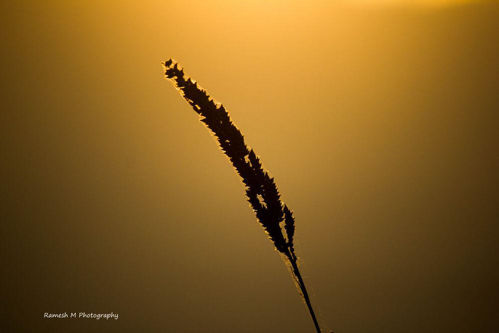 _MG_8096 by Ramesh Muthaiyan