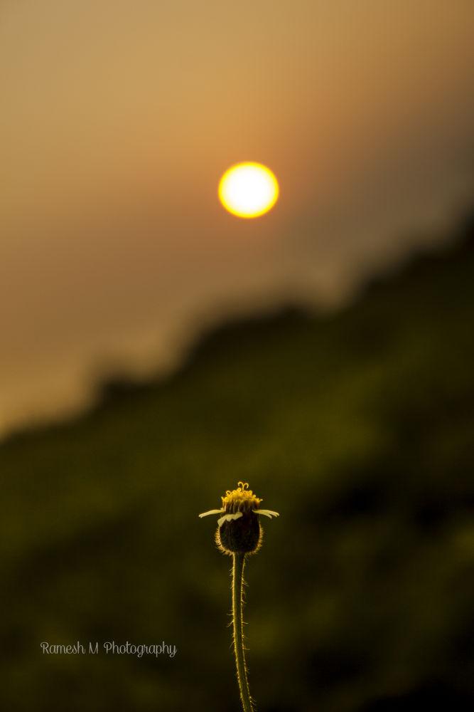Flower by Ramesh Muthaiyan
