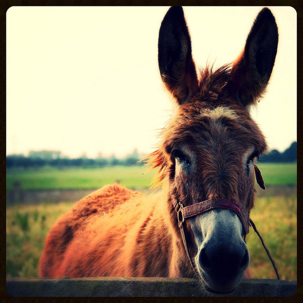 sweet donkey by LindaStrafino