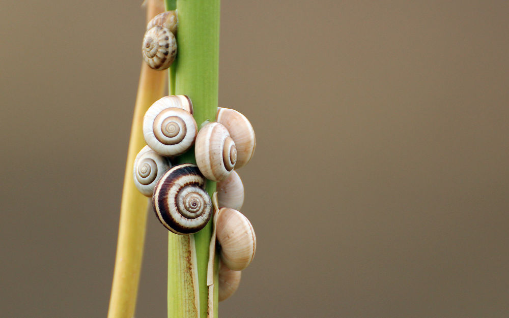 Photo in Macro #snail #close up #nature #plant