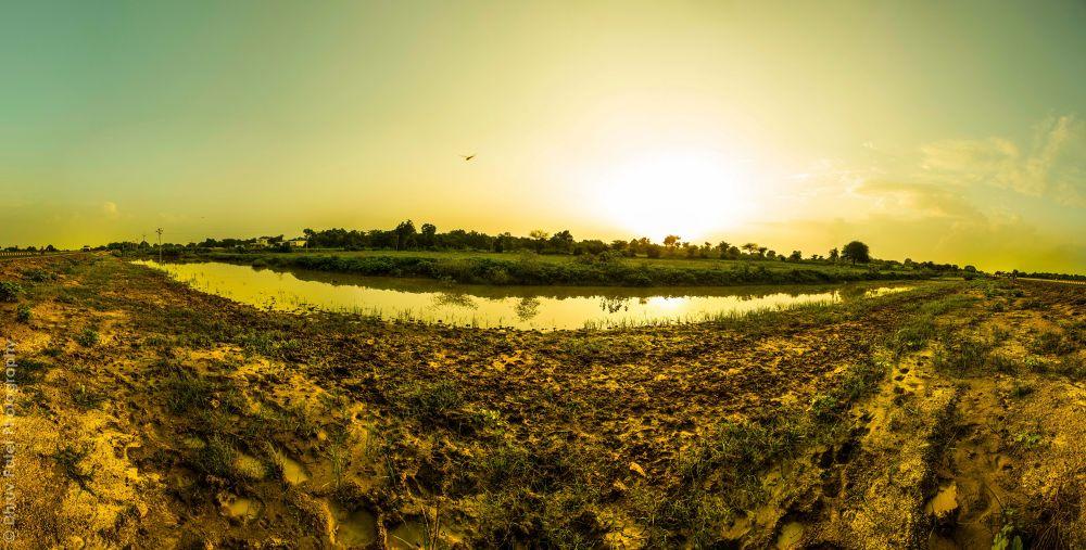 Roadside Nature by Dhruv Patel