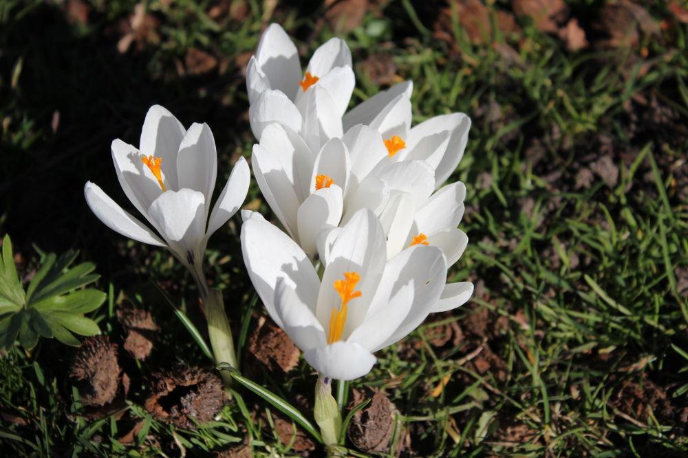 Spring forward by Farmehr