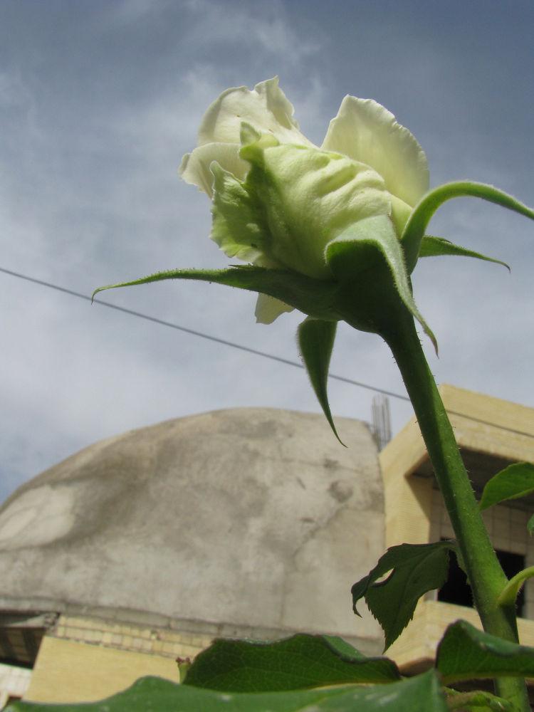 flower-3.jpg by nkargar1356