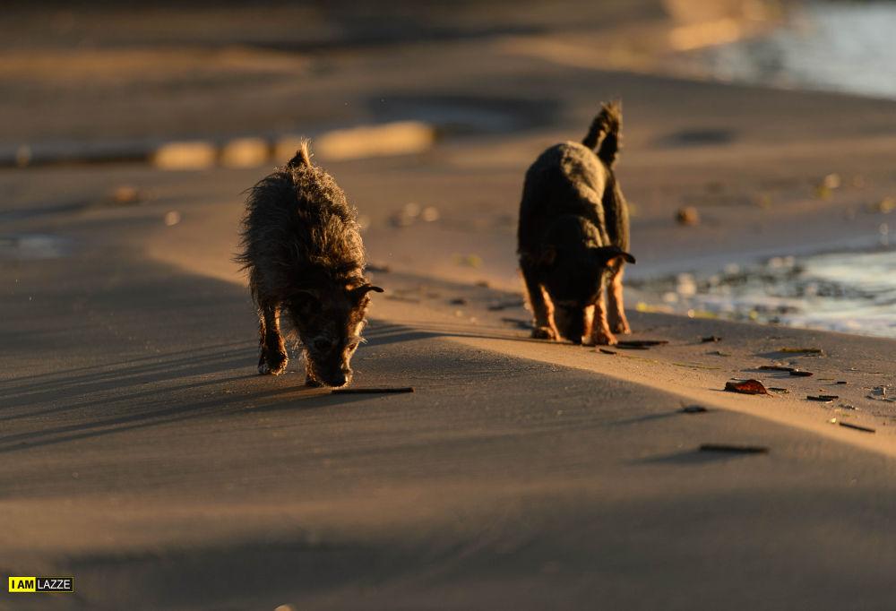 Beach boys by IAMLAZZE