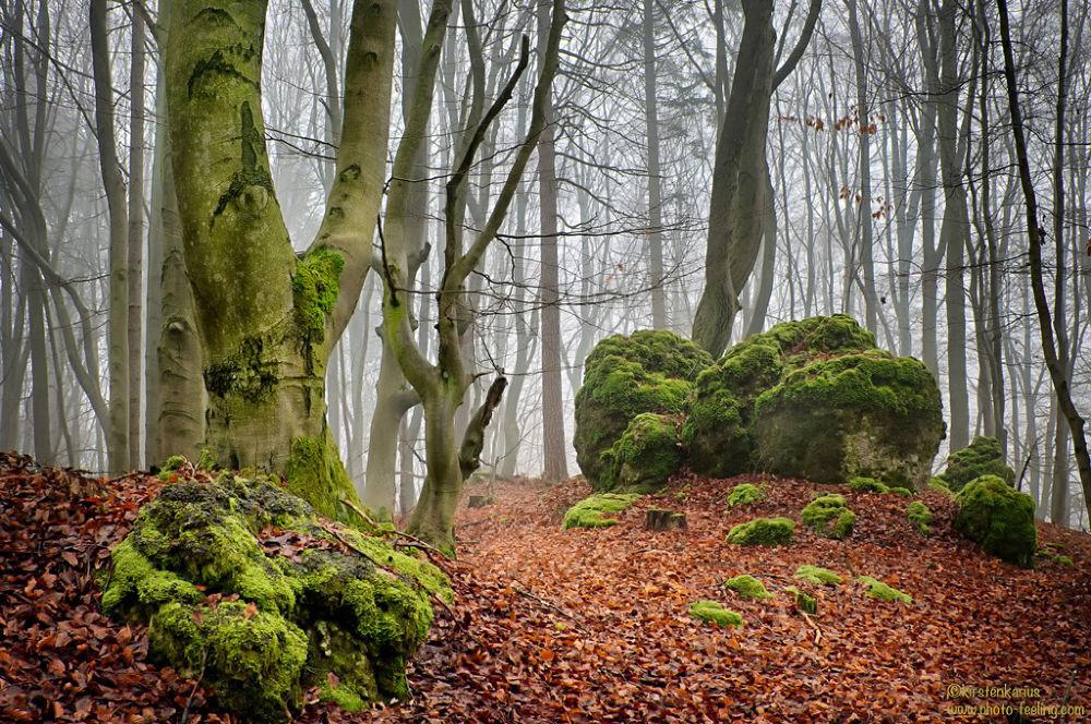 Beech forest by Kirsten Karius