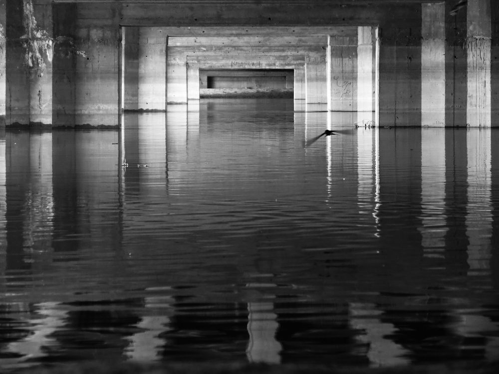 Dark Water and birde by SMH