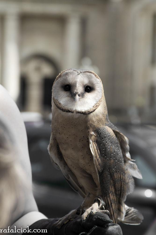 City owl by Rafał Ciok
