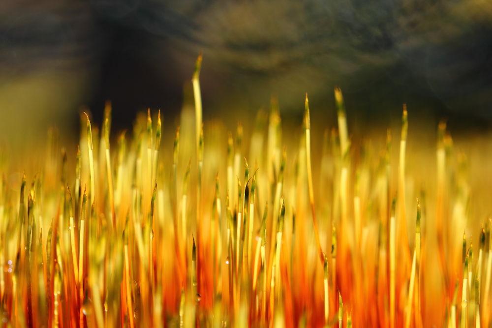 Photo in Macro #nature colors #colors #flames #nature #macro