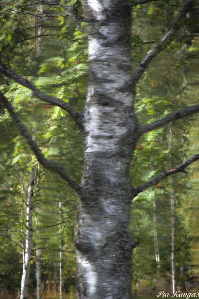 Tree by ipa67