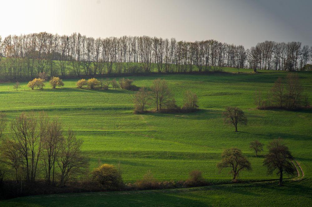 Landscape by FrankKoga