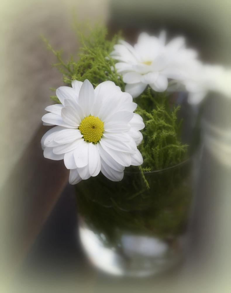 Beautiful by carmelin06