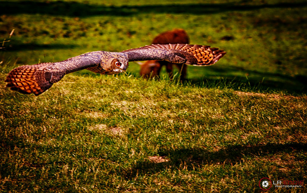 Hunting by Edgar Hempen Pictures
