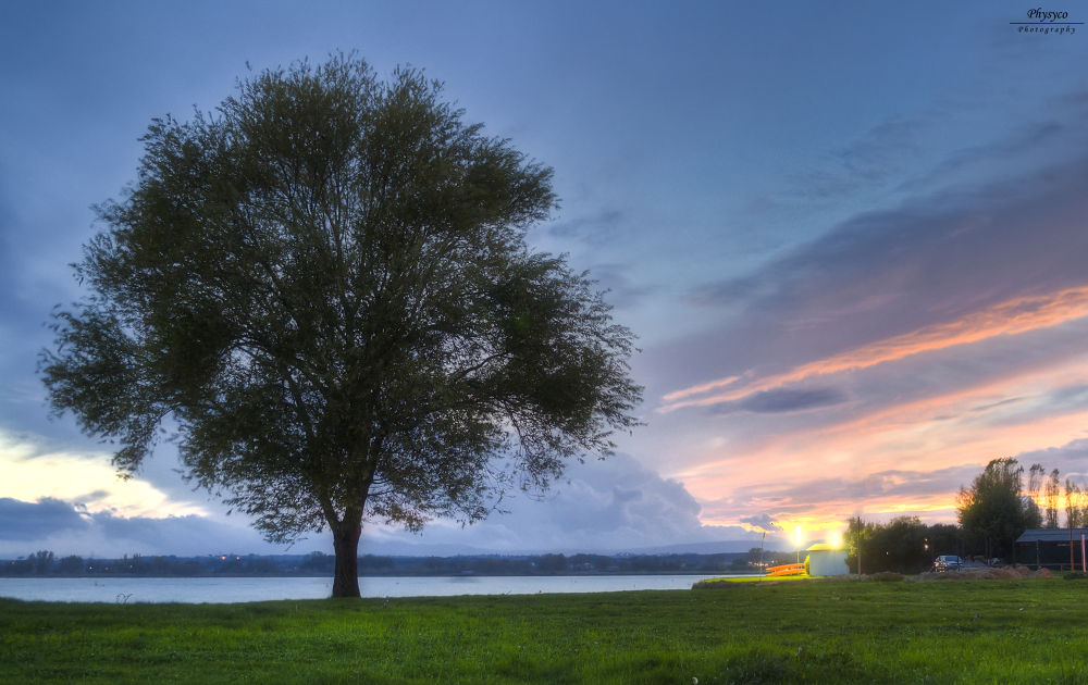 Solitary tree by danilofisichella3