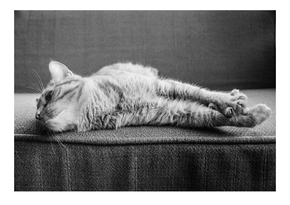 Lazy Gary by Edmundas