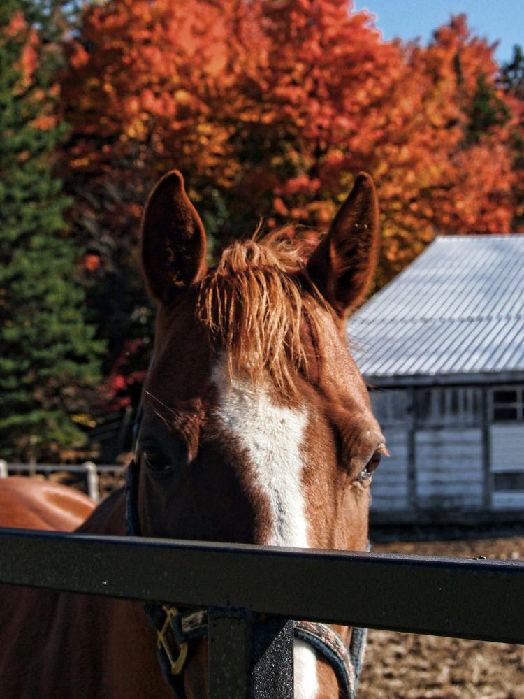 Photo in Animal #horse friend