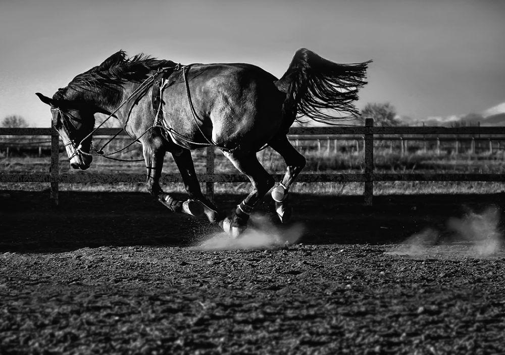 Photo in Animal #horse #ride #free #black #white #nature