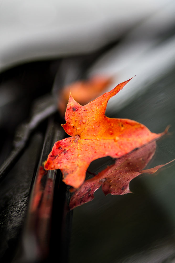 A taste of Autumn by tovelisemossestad