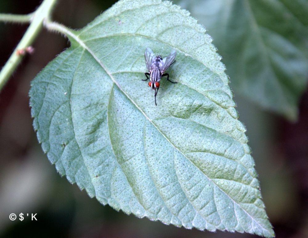 Fly.... by mailsandeepkhurana