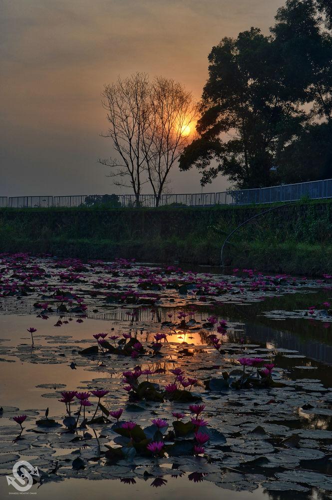 Morning at Bukit Jelutong by ShamsulHidayatOmar