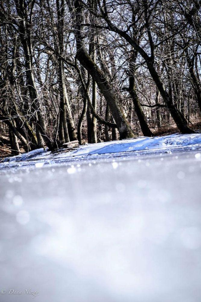 Iced by dananitzoy