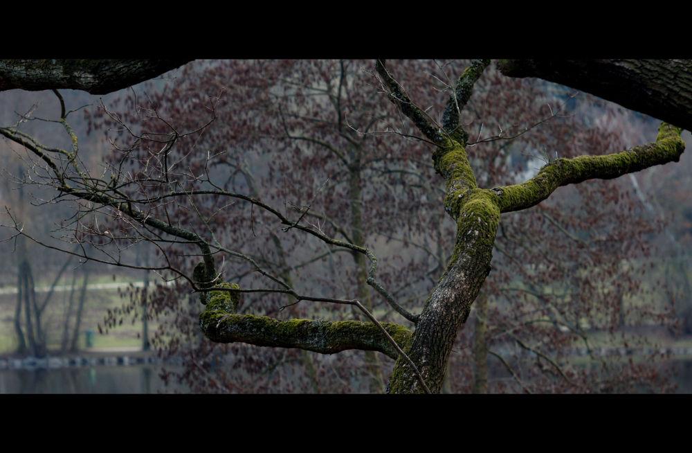 DSC08845_c.jpg^_a.jpg by miso