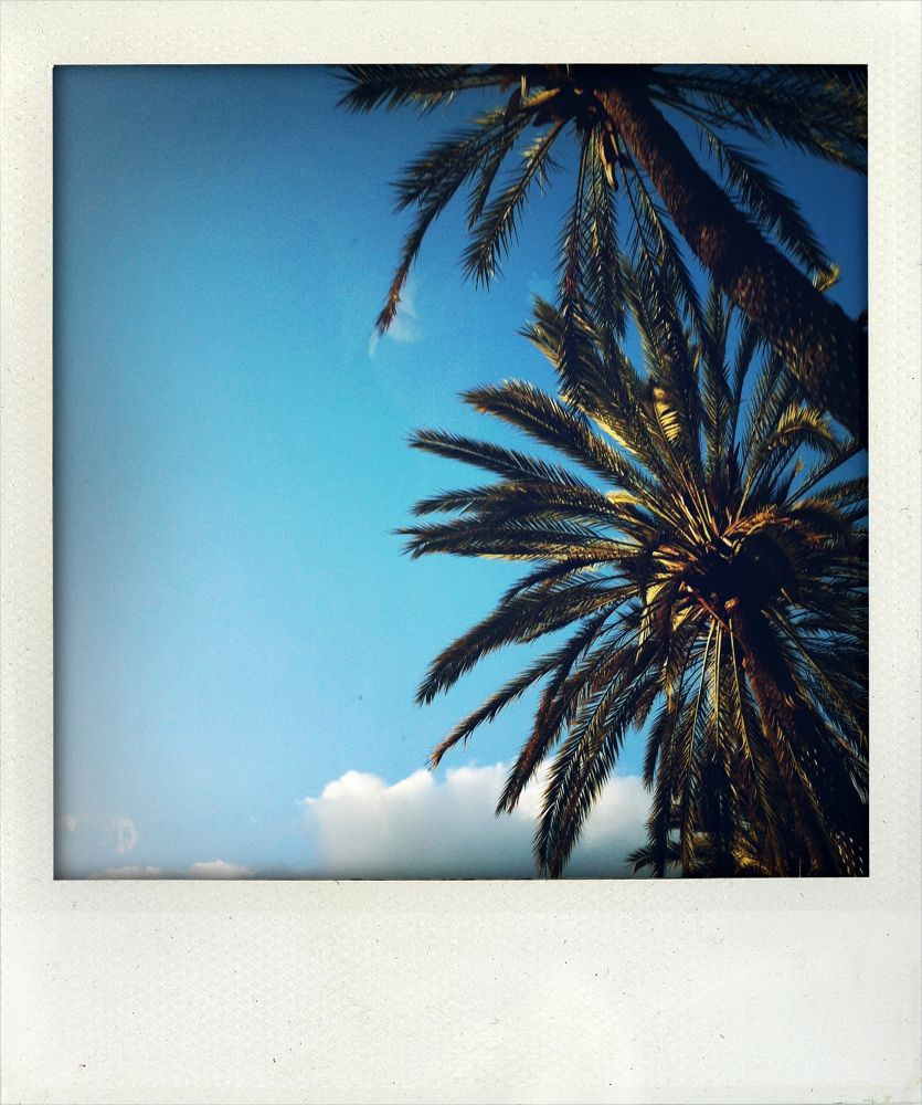 IMG_0944 by miso