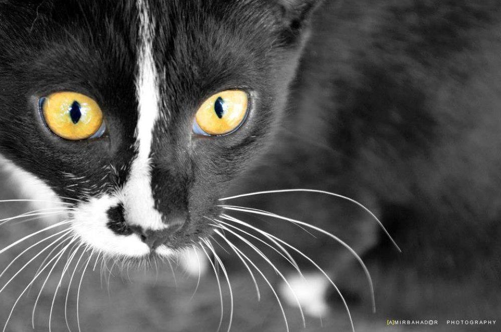 Photo in Random #cat #ypa2013 #nice #animals #black