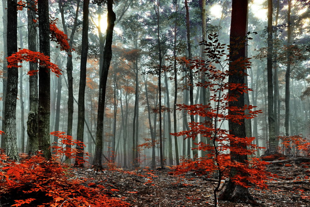 turned red by Andrzej Pradzynski