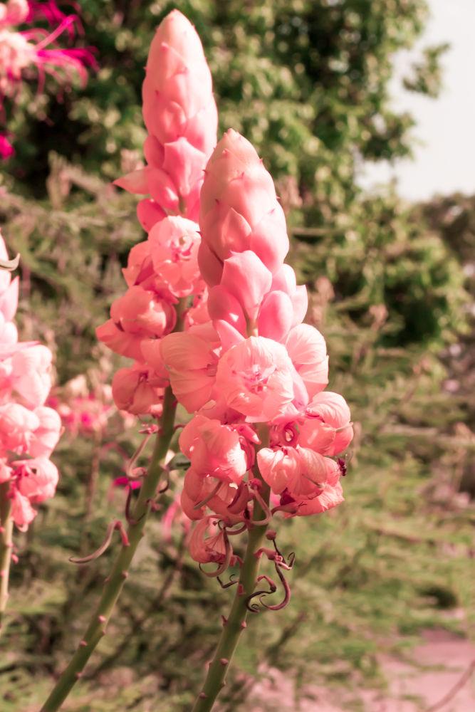 Flower by promohamed