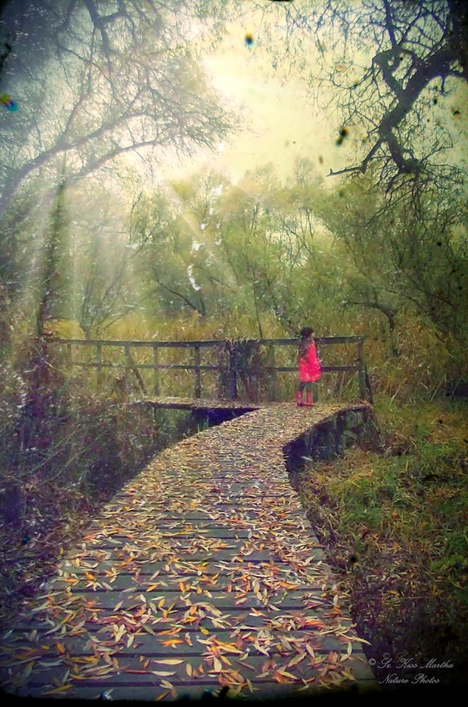 Photo in Nature #nature #autumn #landscape