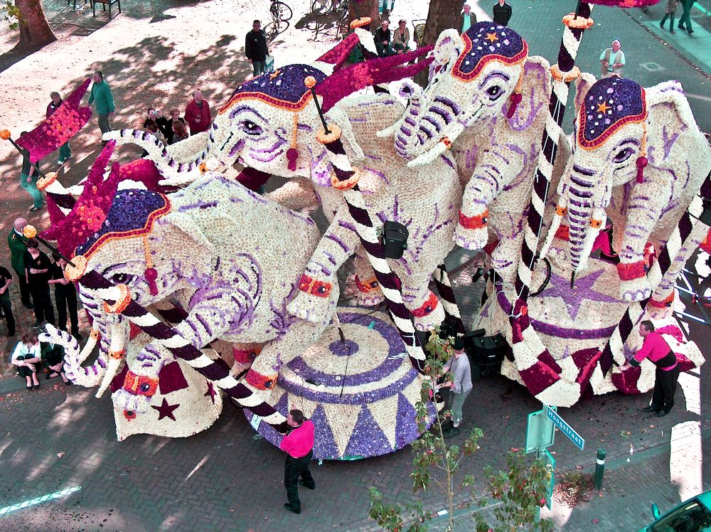 Flower Parade.(Circus) by frankverhoeven1