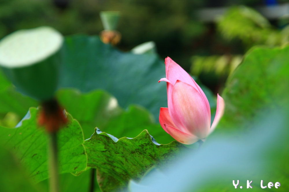 台北_植物園_0052 by 李葉坤