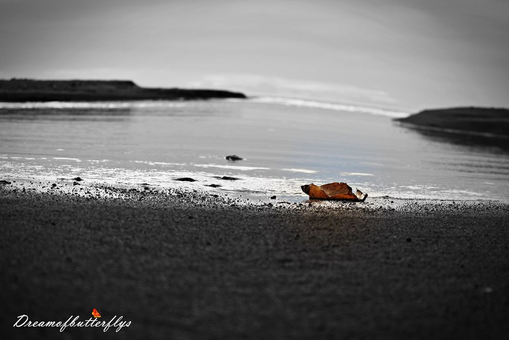 dead leaf ashore by TeeJay Photography