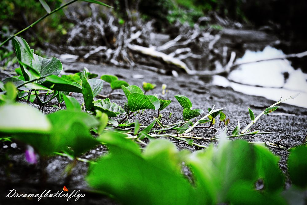 crawling plants  by TeeJay Photography