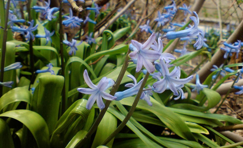 flowers by ezrail