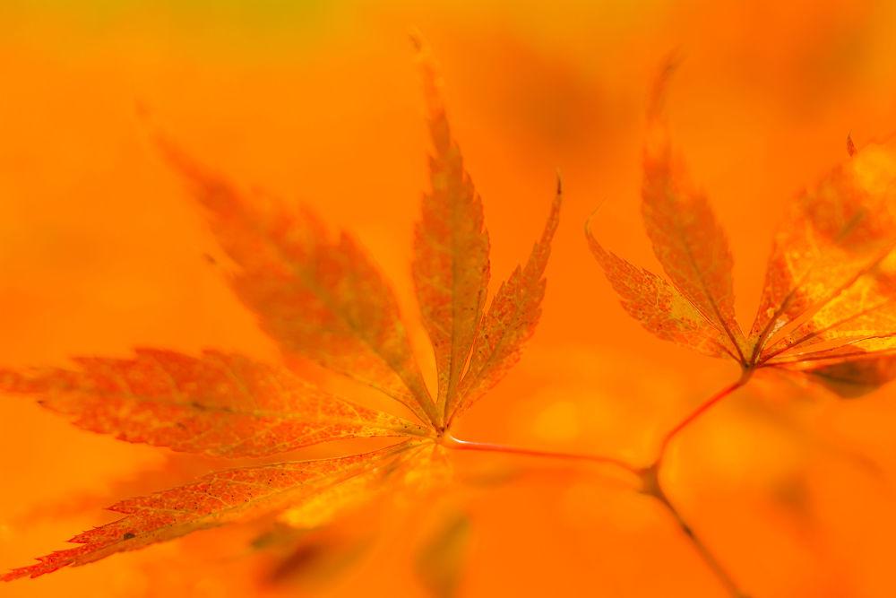 Deep autumn leaves by yasuohirano54