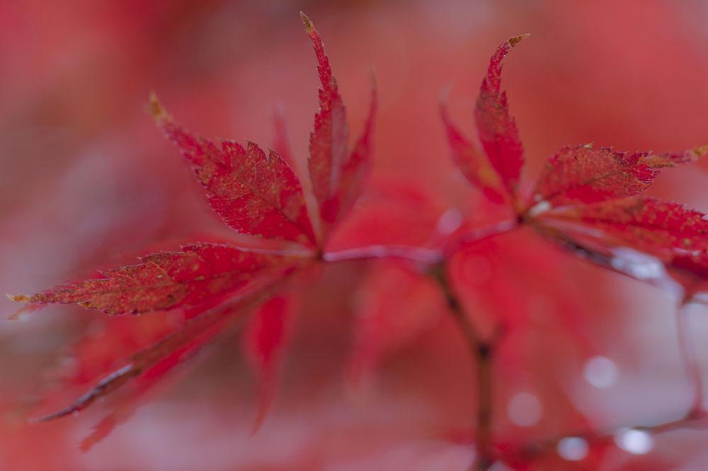 Remnant of autumn rain by yasuohirano54