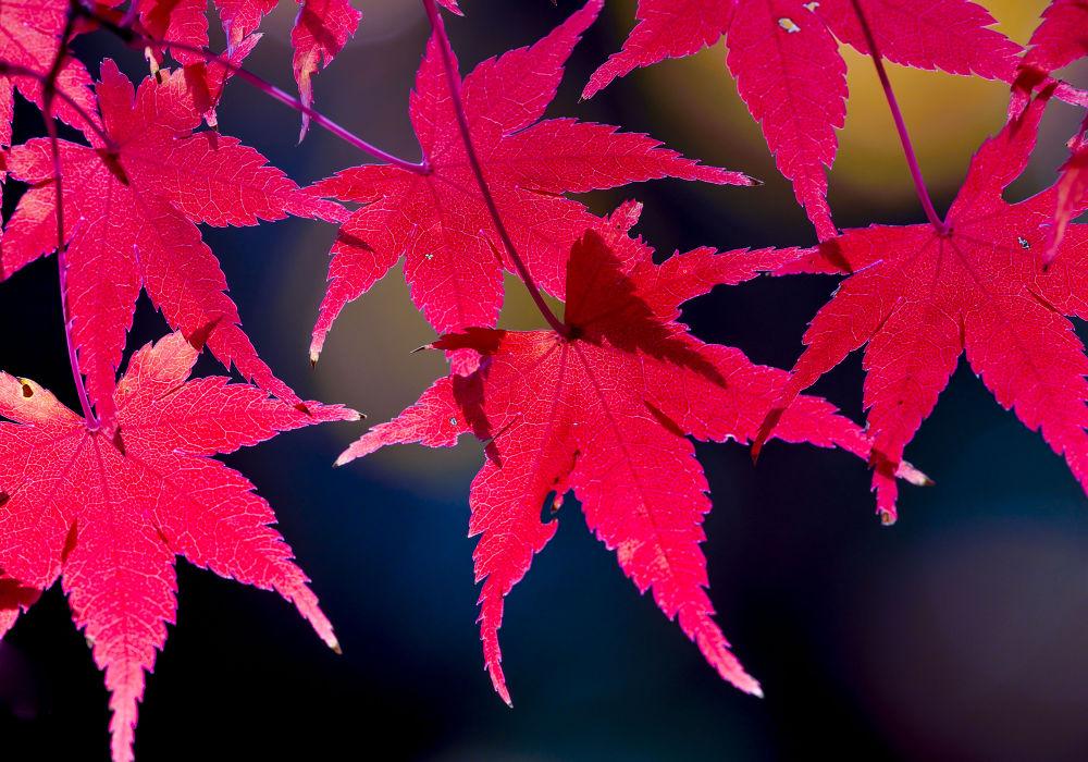 Beautiful late fall by yasuohirano54