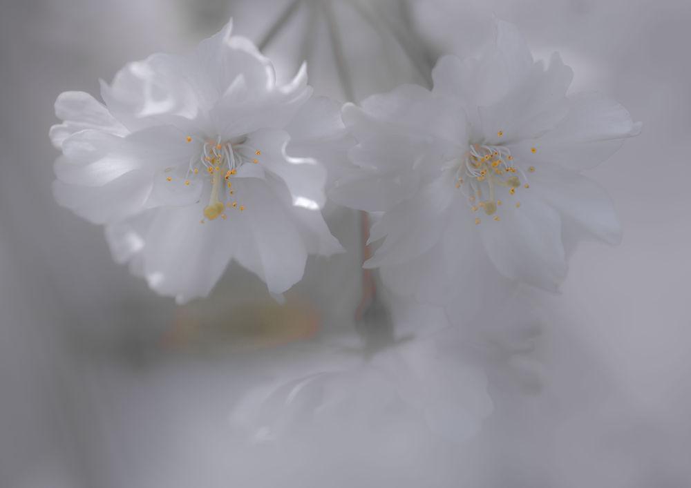 A beautiful spring by yasuohirano54