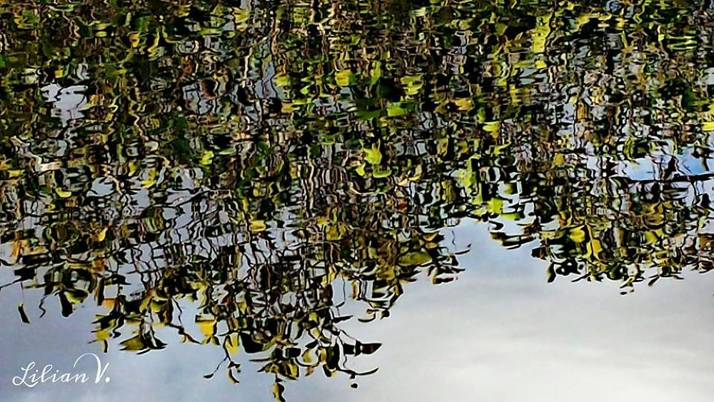 FLORIDA EVERGLADES,REFLEJOS by lilianvillarreal